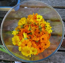 Herbal Medicine with Lucy Vertue